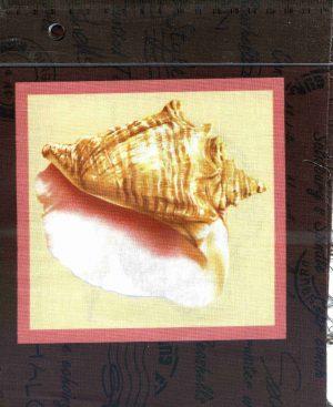 tissu-patchwork-couture-classic-coton-seashells4-20-00007-co